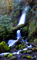 Olympic National Forest, Quinault Waterfall