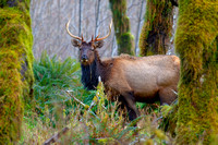 Olympic Mountains, Wildlife & Wilderness